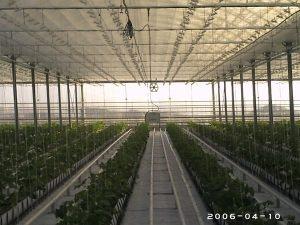 Оранжериен комплекс - гр.Попово
